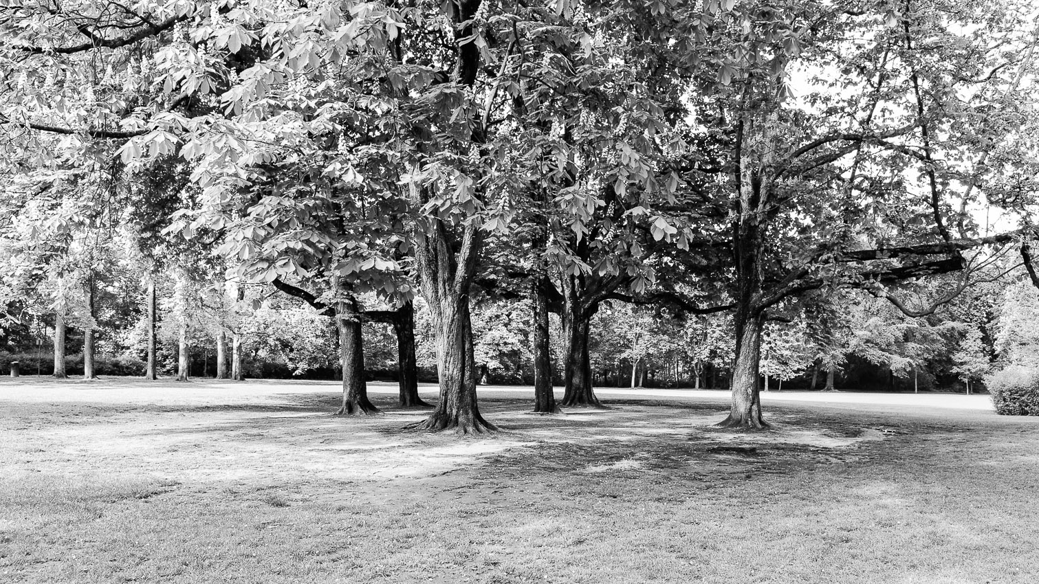 12-parc-foret-location-decors-film-cinema-photo-belgium-bruxelles