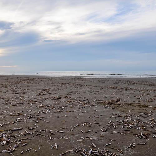 _18V-plages-dunes-location-vente-recherche-decor-film-photo-cinema-bruxelles