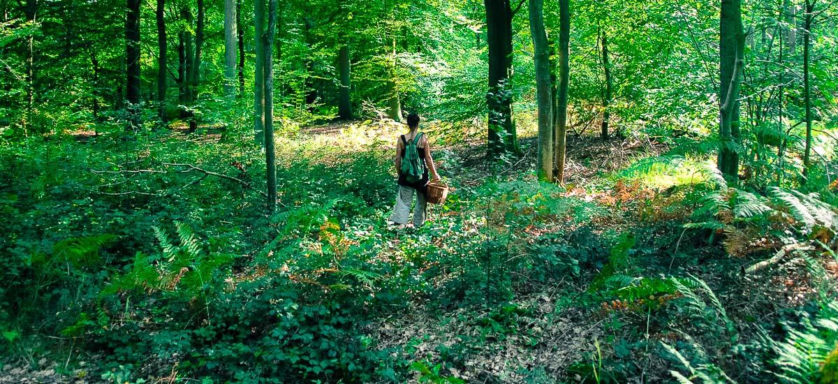 _19H-forêt-parc-jardin-bruno-pradez-decor-film-photo-cinema-location-bruxelles