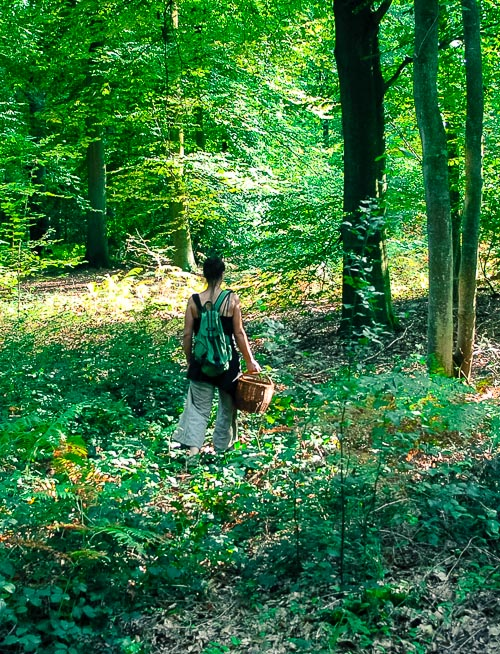 _19V-foret-parc-Jardin-location-vente-recherche-decor-film-photo-cinema-bruxelles