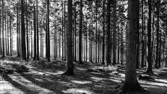 49-park_forest_scouting_shooting_film_photo-brussels_belgium