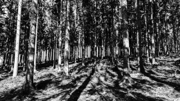 50-park_forest_scouting_shooting_film_photo-brussels_belgium