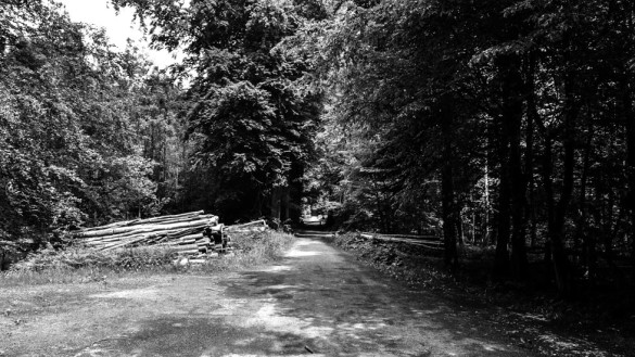 63-park_forest_scouting_shooting_film_photo-brussels_belgium