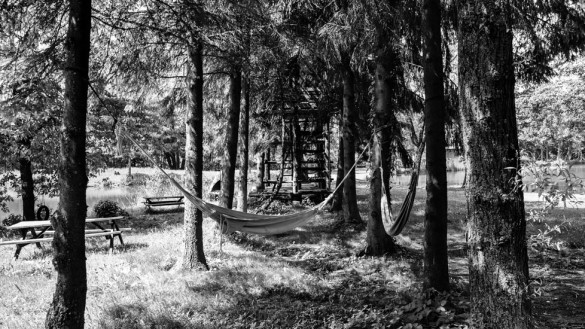 74-park_forest_scouting_shooting_film_photo-brussels_belgium