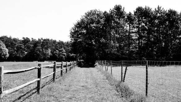 75-park_forest_scouting_shooting_film_photo-brussels_belgium