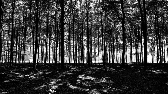 76-park_forest_scouting_shooting_film_photo-brussels_belgium