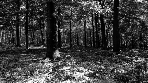 77-park_forest_scouting_shooting_film_photo-brussels_belgium