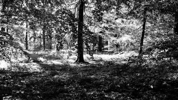 84-park_forest_scouting_shooting_film_photo-brussels_belgium